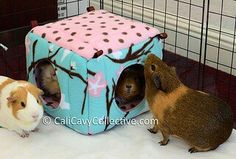 Guinea pig cube :)