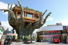 A restaurant on a tree in Japan.