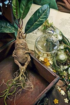 Find images and videos about harry potter, hogwarts and herbology on We Heart It - the app to get lost in what you love. Wiccan, Witchcraft, Mandrake Root, Anniversaire Harry Potter, Kobold, Neville Longbottom, Paperclay, Harry Potter World, Art Plastique