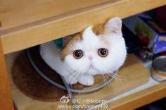 http://weibo.com/snoopy409