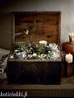 Joulua laatikossa Christmas Flowers, Terrarium, Flower Arrangements, Sweet Home, Vase, Wreaths, Plants, Advent, Home Decor