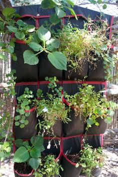 Vertical gardening without shoes!