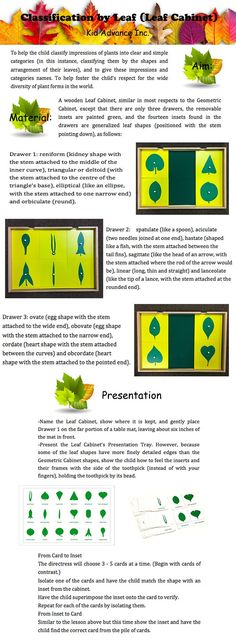 You can also make a Leaves Book (collecting fallen leaves, pressing them and sealing them onto cardboard pages in a book). Later, children can collecting fallen leaves by their own and comparing them to the samples in the Leaf book. Montessori Science, Montessori Homeschool, Montessori Elementary, Montessori Classroom, Homeschooling, Maria Montessori, Leaf Book, Teacher Education, Montessori Materials