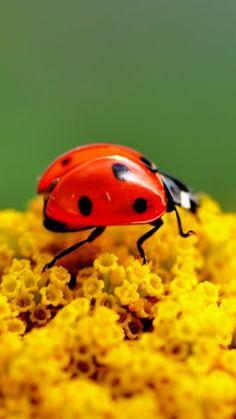 Lady Bugs  ;)