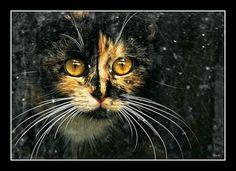 Ksenia's eyes, posted by shcherbyk via www.fotki.yandex.ru