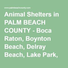 Palm Beach County Animal Shelter Boca Raton