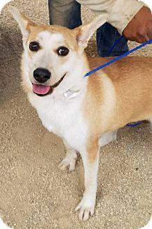 Beagle Coonhound Mix Dog For Adoption In Creston California Hercules Dog Adoption Pets Kitten Adoption