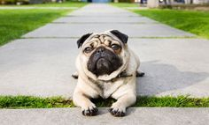 Yo, Person, what's up? It's a pug life.