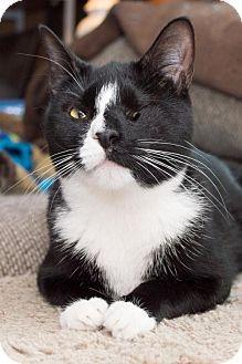 Philadelphia, PA - Domestic Shorthair. Meet Jessica, a cat for adoption. http://www.adoptapet.com/pet/11609062-philadelphia-pennsylvania-cat