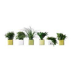 Plantes - IKEA - Décorations