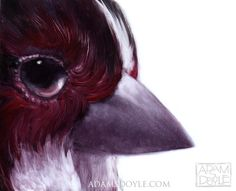Gorgeous Bird Paintings by Adam S. Doyle painting birds