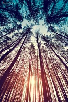 Reminds me of my trip last weekend with my bestie! Lay on your back and look up through the pines.