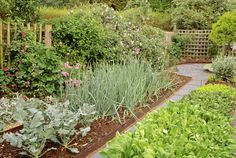 Love this garden with onions, rose trellis, beets, etc.