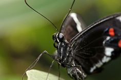 """Photo """"MacroButterfly"""" by BellaImages"""