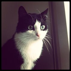 Hi I'm Innuendo, 3 years old. My mum adopted me from the shelter when I was 1 ½ years. Je m'appel Innuendo, j'ai 3 ans. Ma maman m'a adopter d'un refuge quand j'avais 1 ans et demi.