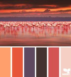 Color palette / Design Seeds
