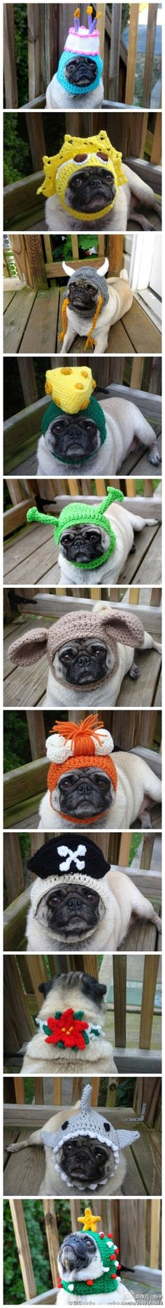 A pug of many hats  --He just looks like he's thinking...Put down the knitting needles and back away from them.