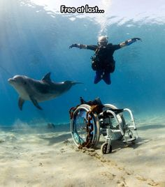 funny-chain-wheelchair-diving-dolphin>>> See it. Believe it. Do it. Watch thousands of spinal cord injury videos at SPINALpedia.com