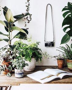 #PlantLife. Visit welltended.com for plant inspiration!