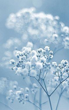 d26b93970c974a944536144e6accb1d3--light-blue-flowers-flower-blue