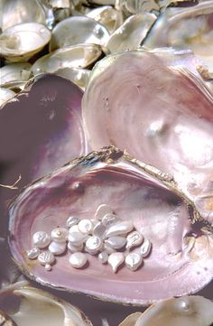 Oysters make pearls out of the grains of sand that annoy them. Wedding Ring Styles, Wedding Band, Sea Creatures, Starfish, Fashion Rings, Style Fashion, Sea Shells, Oyster Shells, Pretty In Pink