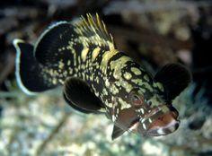Siracusa, Plemmirio unica oasi siciliana inserita nel portale delle aree marine protette d'Italia