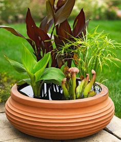 Pond In A Pot Create A Container Water Garden Container