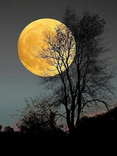 Moon Images, Moon Photos, Moon Pictures, Nature Pictures, Pretty Pictures, Moon Photography, Landscape Photography, Shoot The Moon, Beautiful Moon