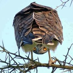 owl lurking