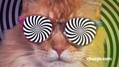 #FridayFeeling When you realize it's gonna be a long Weekend! ✨✨  #vjloops #video #cats #partycat #friday #memes #trippy #lol #animals #fun #retro #CGI #animation #visuals #weekend #club #vj #loops #funny #weekendvibes #funkyfriday #meow