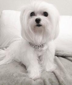 Looks like a white Twiggy (my dog).