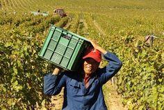 La Chine, nouvel eldorado du vin