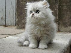 Spazz Kitten. (Note: Click for more) #Cat #Kitten