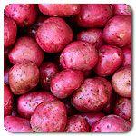 Organic Red Norland Potato