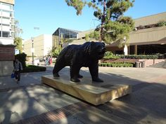 Joe the Bruin. Ucla Campus, College Campus, Bay College, Student Living, Ucla Bruins, Home And Away, Golden State, High School, University