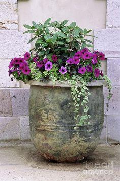 images of flowers in large pots   Flower Pot 3 Photograph by Allen Beatty - Flower Pot 3 Fine Art Prints ...