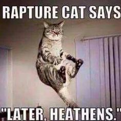 source unknown | rapture cat