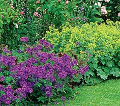 Thrilling Contrast    Combine two prolific ground covers for nonstop drama. Both Lady's Mantle (Alchemilla mollis) and Geranium 'Rozanne' PP 12,175 perform without fail, and the combination of their frothy chartreuse flower clusters and purplish blue blooms is a knockout.