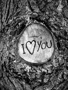 I want you to carve are initials in a tree
