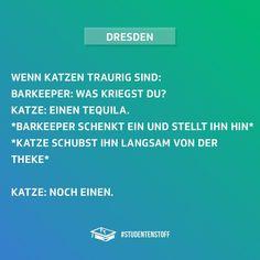 """Gefällt 9,249 Mal, 262 Kommentare - Täglich neuer Jodel-Stoff! (@studentenstoff) auf Instagram: """"Ich sehe es vor mir! 😂😻 #studentenstoff #katze #barkeeper #traurig #tequilla #katzen #miau…"""""""