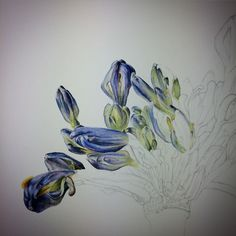 Paper slowly being covered #botanicalart #workinprogress #watercolor #botanical