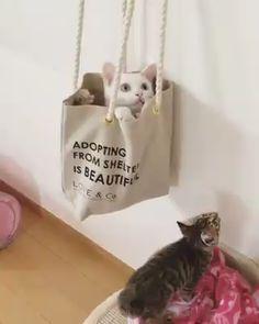 Cute Baby Animals, Animals And Pets, Funny Animals, Kittens Cutest, Cats And Kittens, Cute Cats, Soft Kitty Warm Kitty, Tiny Kitten, Grumpy Cat