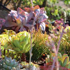Succulent Jungle photo by Dalla Vita