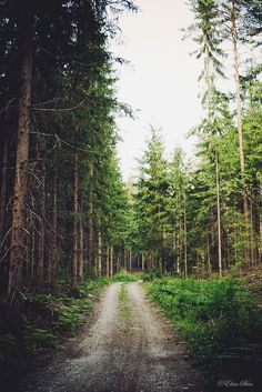 Photography Girl Nature Forests Paths 48 Ideas For 2019 Mother Earth, Mother Nature, Beautiful World, Beautiful Places, Forest Path, Forest Road, We Are The World, Adventure Is Out There, Amazing Photography