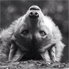 Wolf                                                                                                                                                     Plus