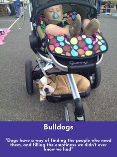 Look at the webpage to see more about Bulldogs Follow the link to read more. #Bulldogs #bulldoglove