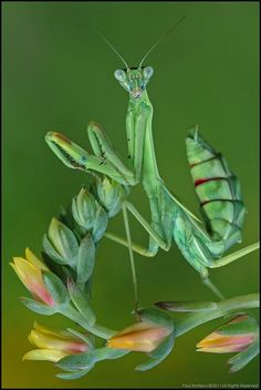 A beautiful insect photo.: