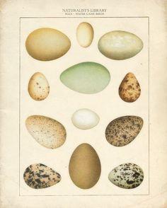 N.H. - Vintage Eggs Print