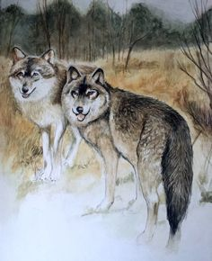 Lobos by Cecilia (CJ)