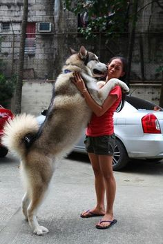Woah. He's huge . (or is she real small?)  #pets #Animals #animal #pet #dog  #dogs #cats #photooftheday #cute #nature #pup #dogoftheday #lovedogs #lovepuppies #doglover